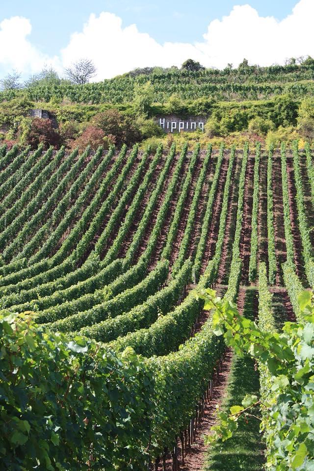 Wijnmakersdiner en proeverij Jungwinzer Duitsland, zaterdagavond 10 november